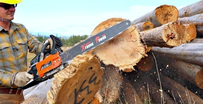 pro chainsaw loggers